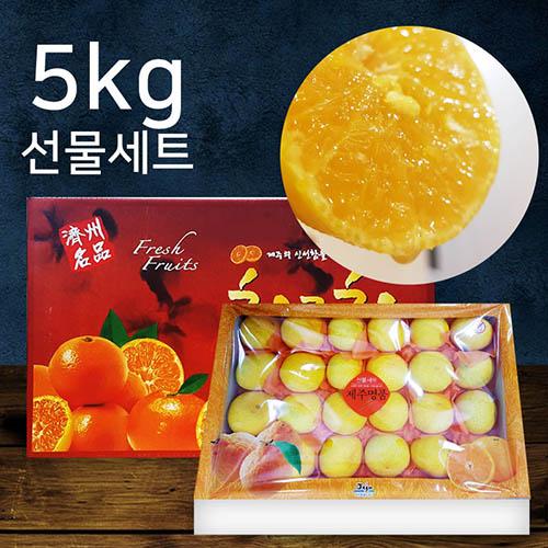 제주황금향 5kg 27수내 - 세트(선물용)