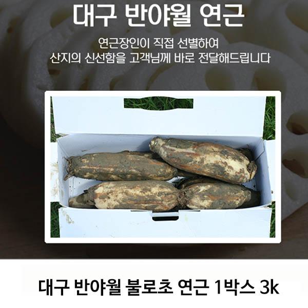 대구 반야월 불로초 연근 1박스 3k