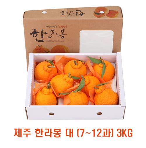 [면세]제주 한라봉 대 (7~12과) 3kg