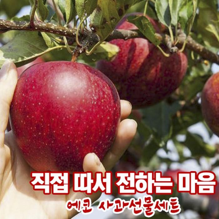 에코 사과선물세트 2박스 4kg (12개입)