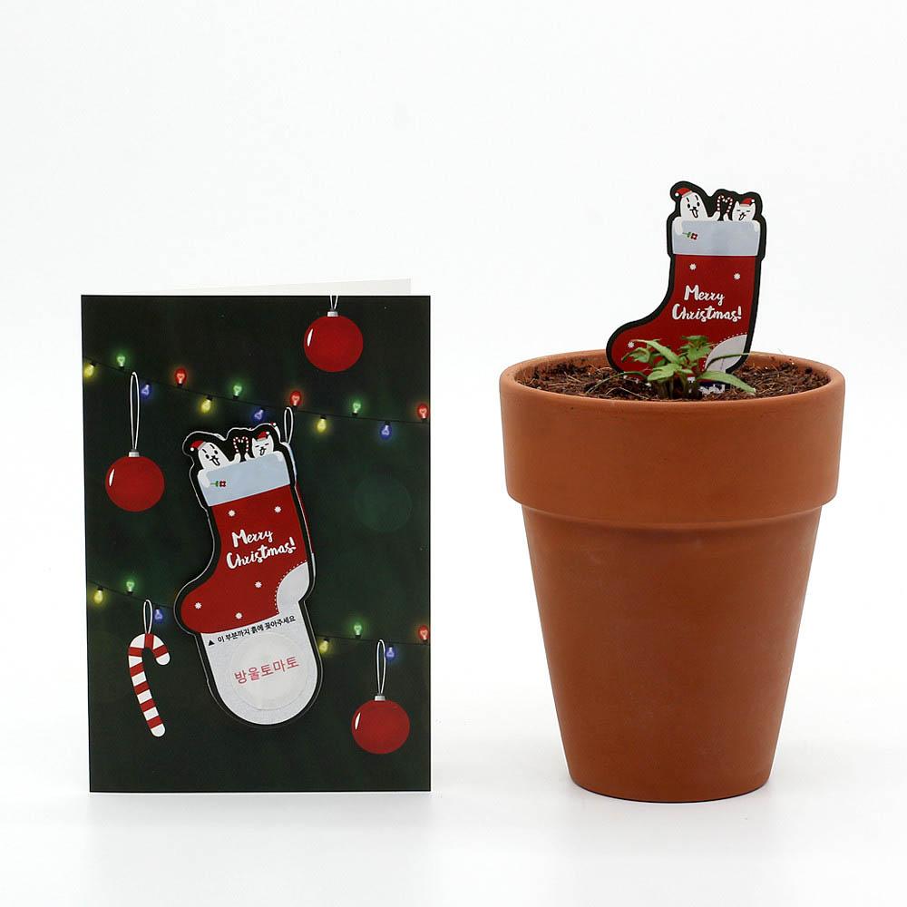크리스마스 씨앗카드 양말(방울토마토)