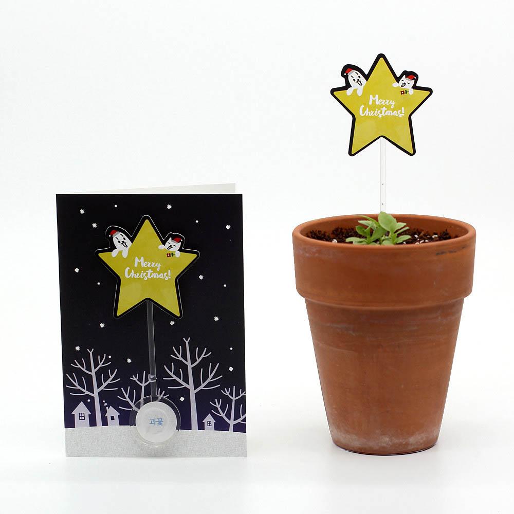 크리스마스 씨앗카드 별(과꽃)