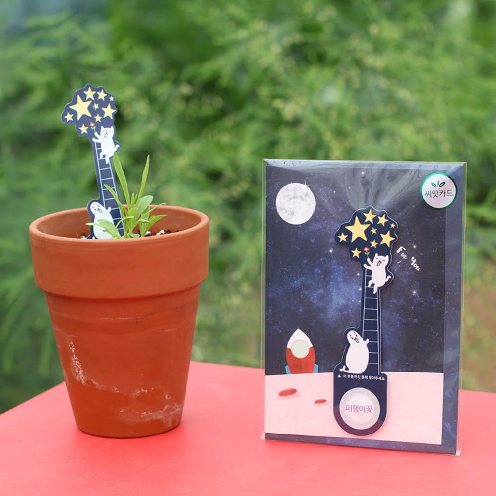우주여행 씨앗카드 패랭이꽃