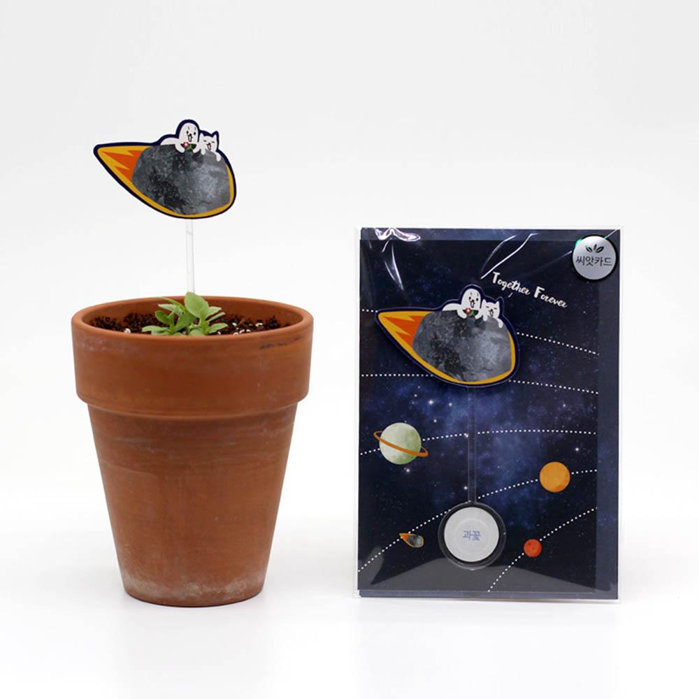 우주여행 씨앗카드 과꽃