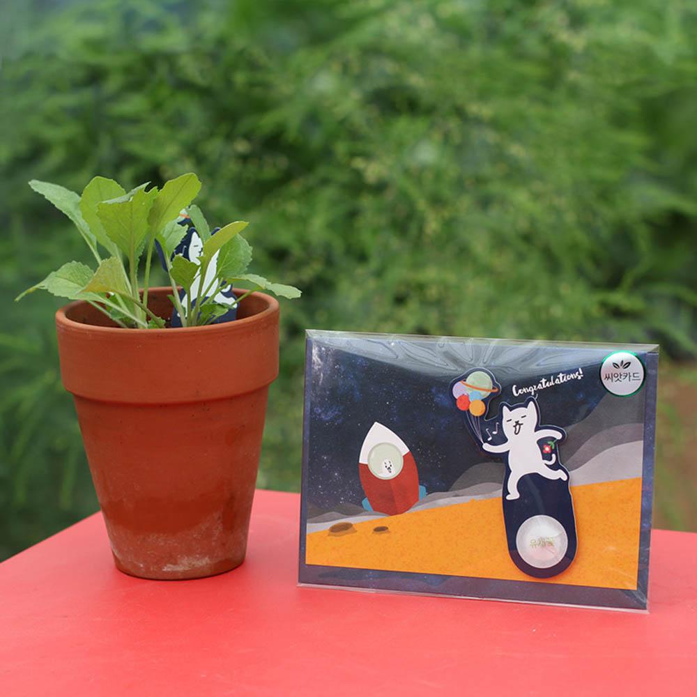 우주여행 씨앗카드 유채