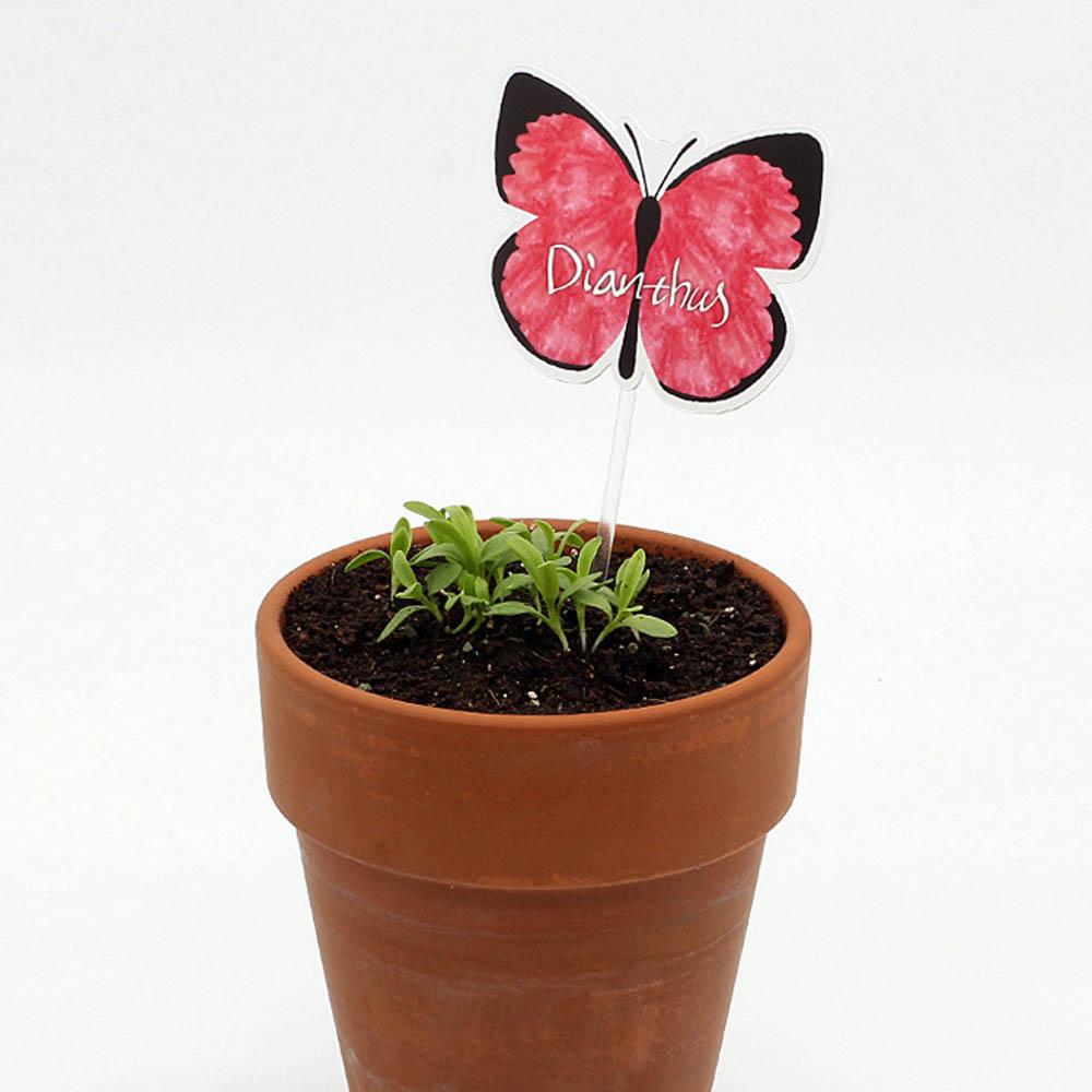 마리몬드 씨앗카드 패랭이꽃(나비)