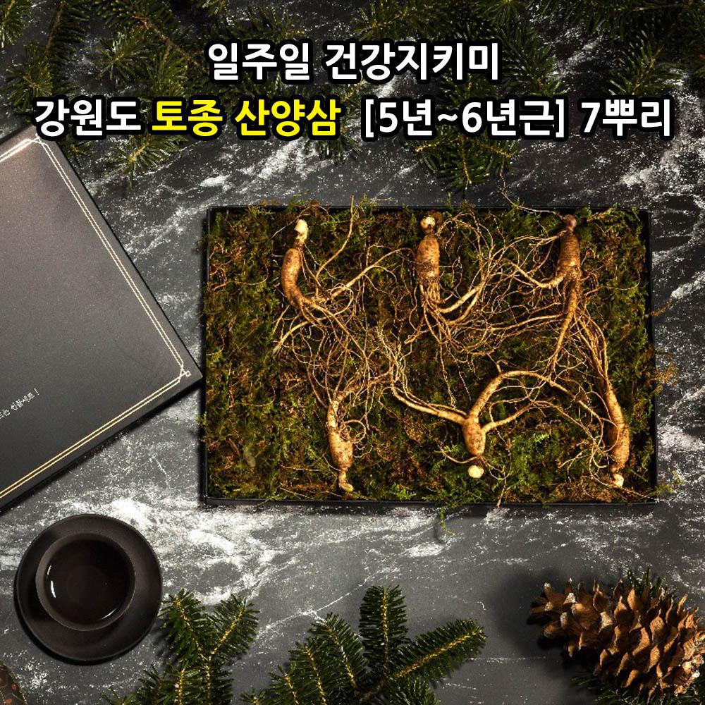 [선물포장] [더 기다림] 일주일 건강지키미 강원도 토종 산양삼  [5년~6년근] 7뿌리