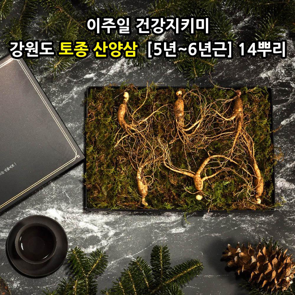 [선물포장] [더 기다림]  이주일 건강지키미 강원도 토종 산양삼  [5년~6년근] 14뿌리