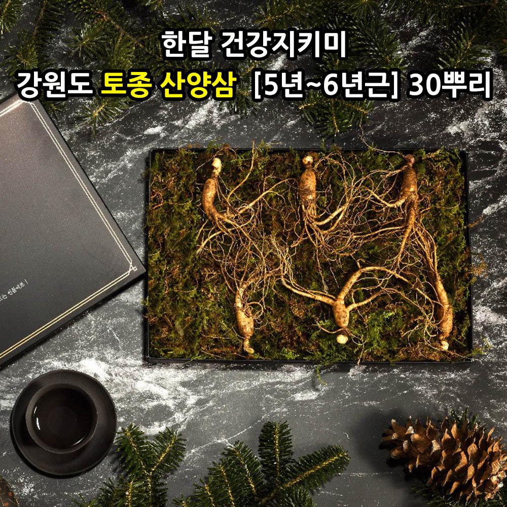 [선물포장] [더 기다림] 한달 건강지키미 강원도 토종 산양삼  [5년~6년근] 30뿌리